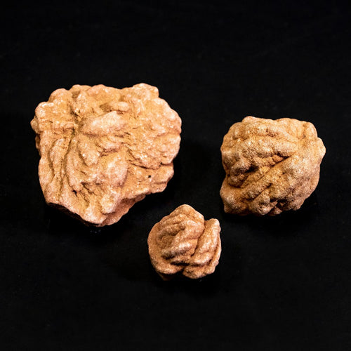 Barite Rose Rock Small Size 50 Cents Each Oklahoma Rose Stone
