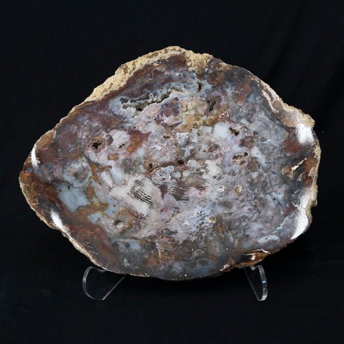 Natural Petrified Wood Slice Brown Cream Gray Tones