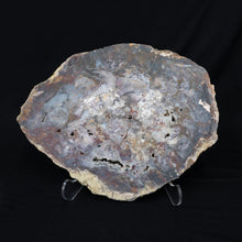 Small Table Top Size Petrified Wood Slice Brown Gray Cream Tones
