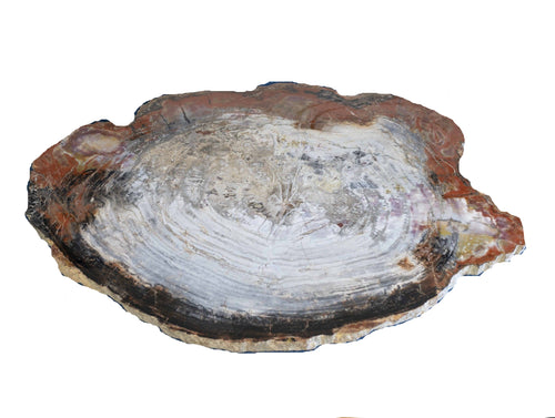 Petrified Wood Slice From Arizona Natural Cream Red Gray Black Tones