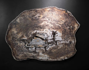 Large Slab Of Petrified Wood From Oregon
