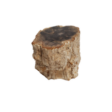 Beige Small Petrified Wood Stump