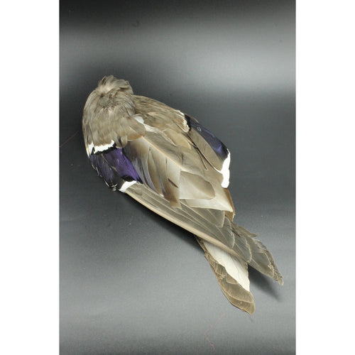 MALLARD WINGS Fly Tying Material Duck Feathers Hareline Whole Wing Pair NEW!