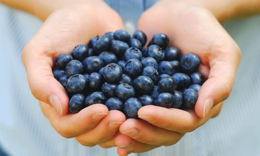 10 Surprising Facts You Didn't Know About Blueberries! feature image