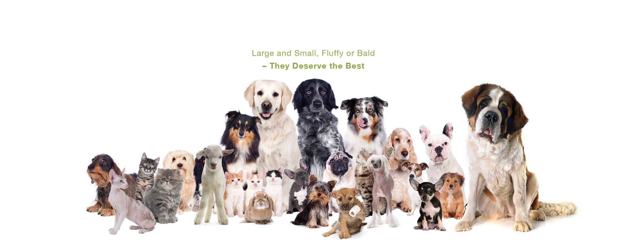 collection of different size, appearance and breed of dogs, cats, rabbits, goats