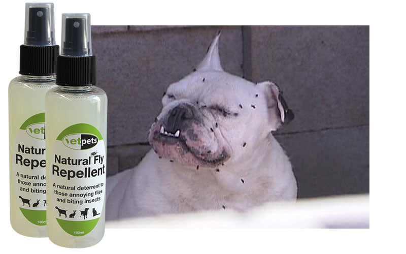 White bull dog covered in black flies and bottles of natural fly repellent