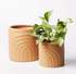 Jones and Co Rainbow Pot Set Elm