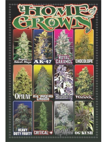 Organic Home Grown Cannabis  - Maxi Poster