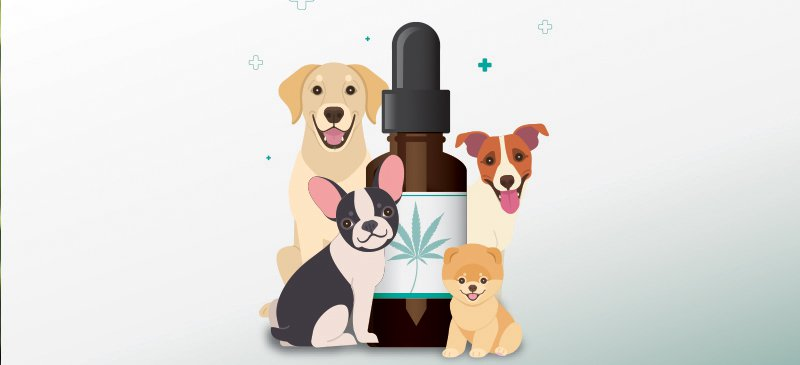 DOGS and wonderful CBD Oil