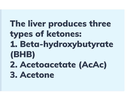 the-liver-produces-three-types-of-ketones