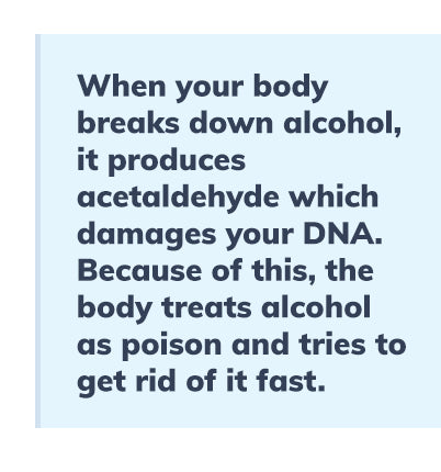 how-the-human-body-metabolizes-alcohol