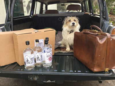 Harry the gin dog