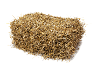 Golden Barley Straw