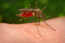 Where is West Nile Virus? West Nile Virus Cases by State