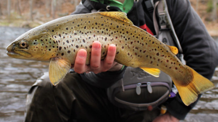 hand holding up large green, yellow, black specked trout on a river