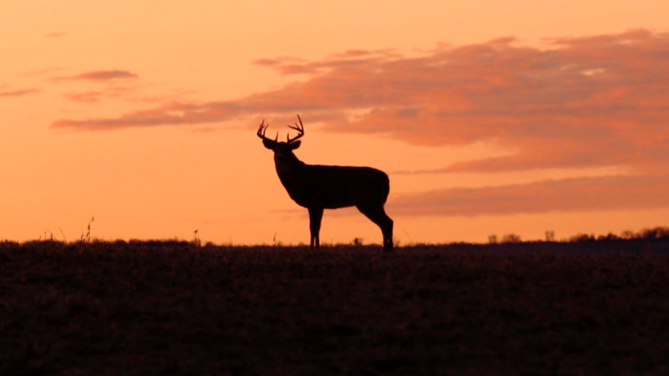 Deer-In-The-Pink-Sunset-Ranger-Ready-Repellents