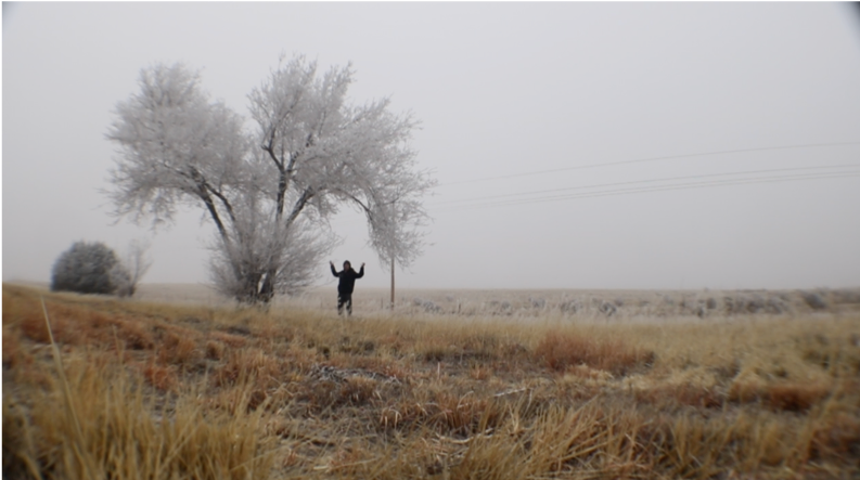 person in a field near a tree with no leaves on a foggy day -  pulled over in a white out – this picture does it no justice