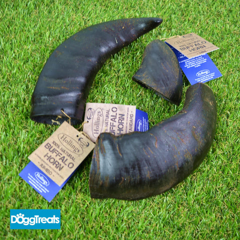 Hollings Buffalo Horn Dog Chews