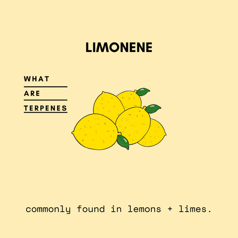 terpenes, clean skincare, lemon terpenes, essential oils, aromatherapy, relaxation, organic