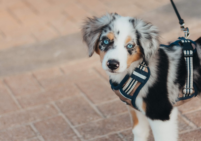 How to Use a Retractable Leash Safely with Small Dogs