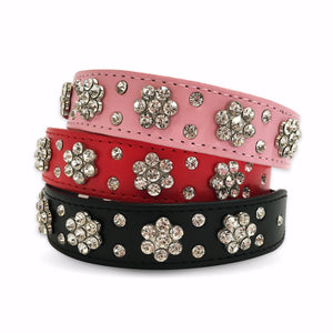 Embellished Dog Collar