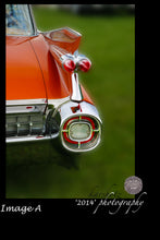 "24X16 Canvas Print ""The Caddy Fin"" / 2 Options"
