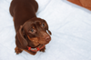 Potty Training Your Foster Pup