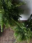 Boston Fern Hanger