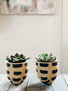 Duo of Succulents (Set of 2)
