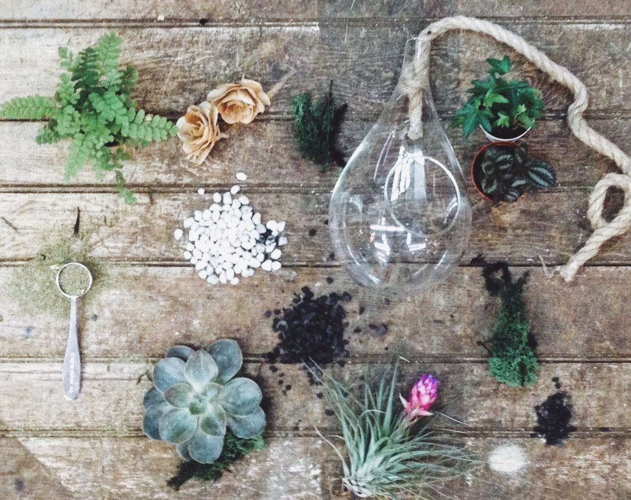 Large Terrarium Kit