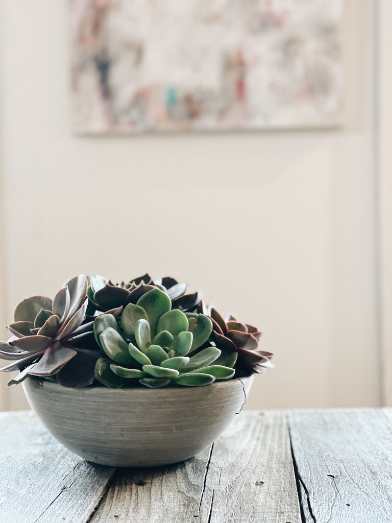Large Succulent Bowl