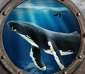 Picture of an orca