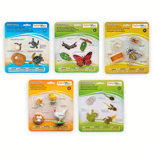 Life Cycle Bundle 1 - Set of 5 Life Cycle Toys