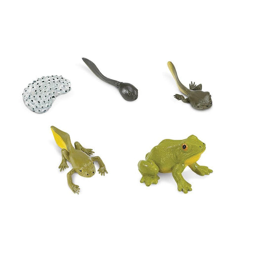 Life Cycle Bundle 1 - Set of 5 Life Cycle Toys - Frog