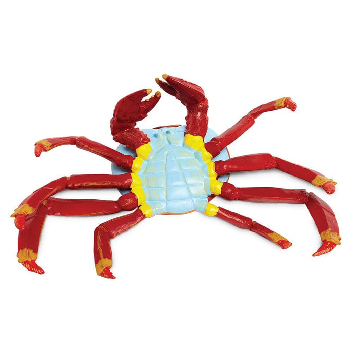 Galapagos Sally Lightfoot Crab Educational Toy