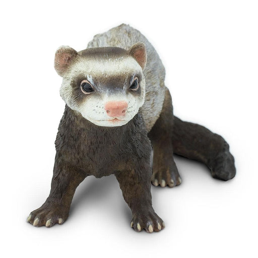 Ferret Learning Toy
