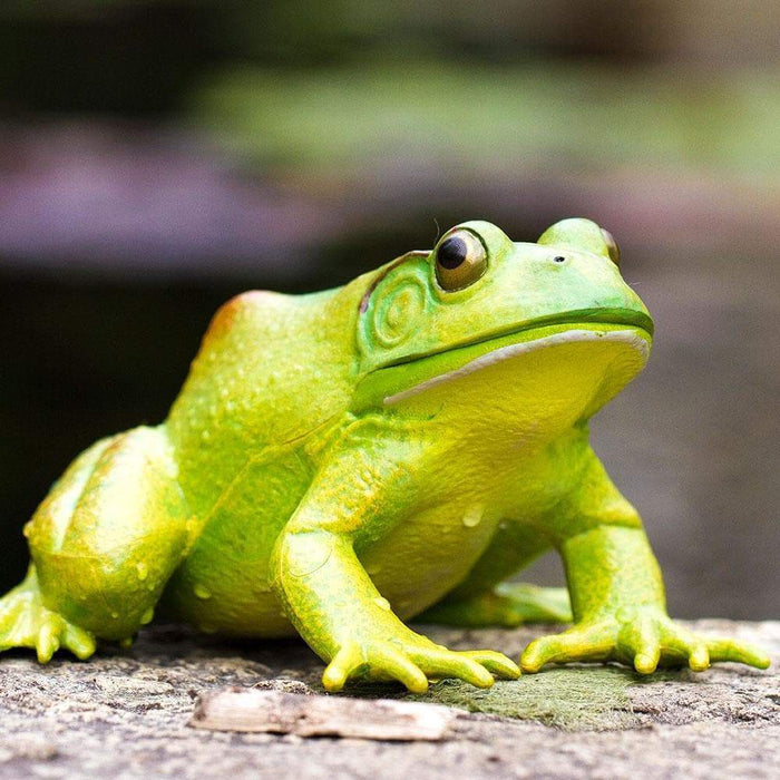 American Bullfrog - Safari Ltd®