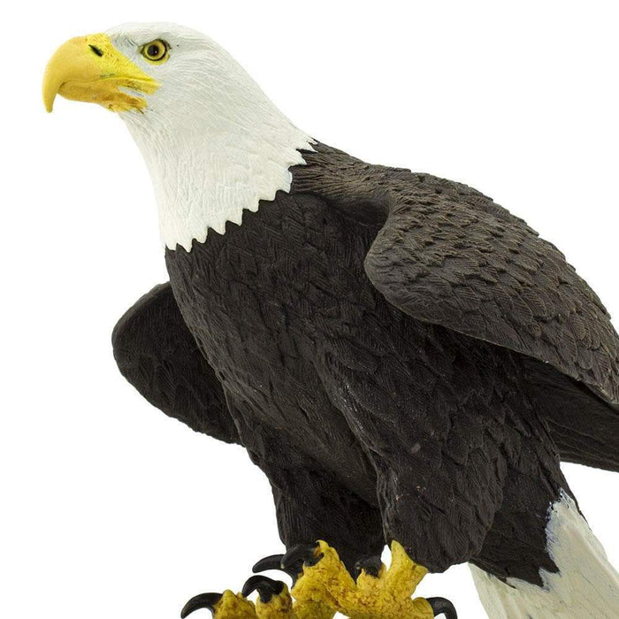 Bald Eagle - Safari Ltd®