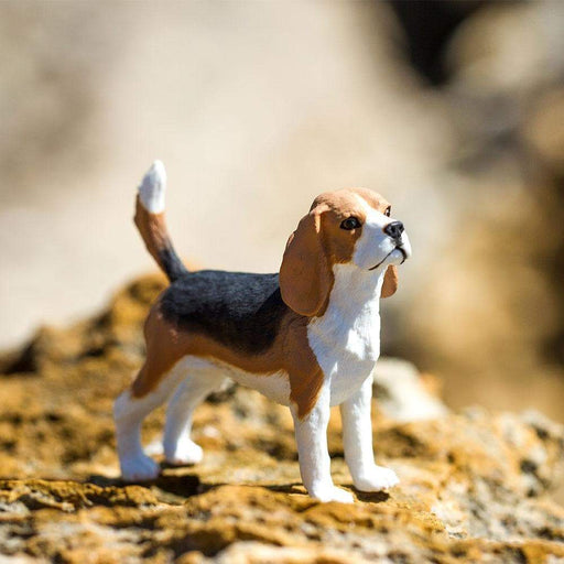 Beagle - Safari Ltd®