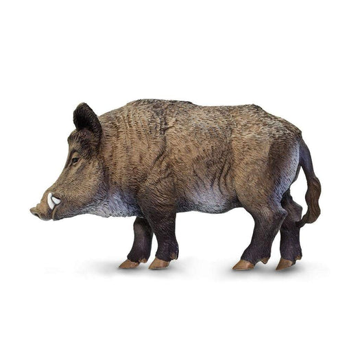 Boar - Safari Ltd®