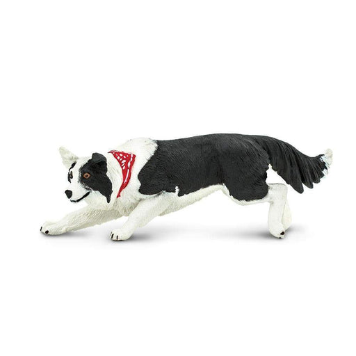 Border Collie - Safari Ltd®