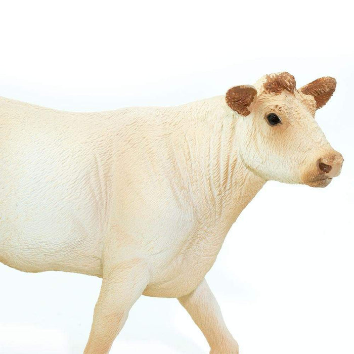 Charolais Cow - Safari Ltd®