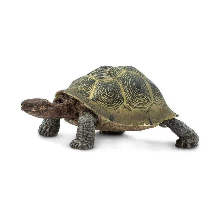 Desert Tortoise - Safari Ltd®
