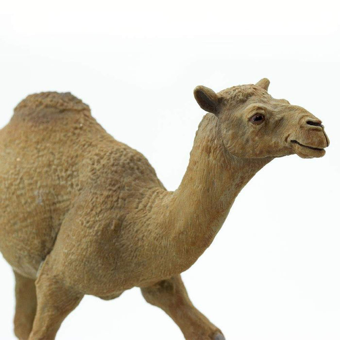 Dromedary Camel - Safari Ltd®