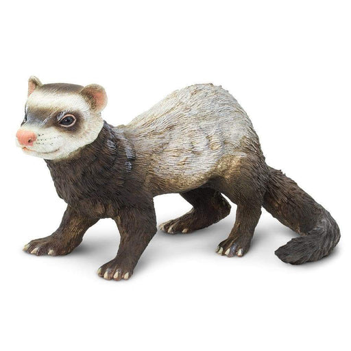 Ferret - Safari Ltd®