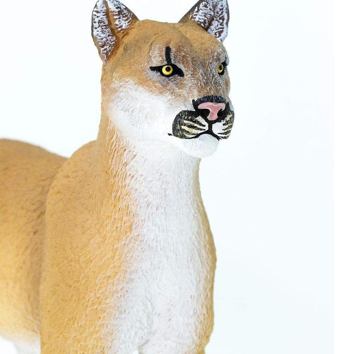 Florida Panther - Safari Ltd®