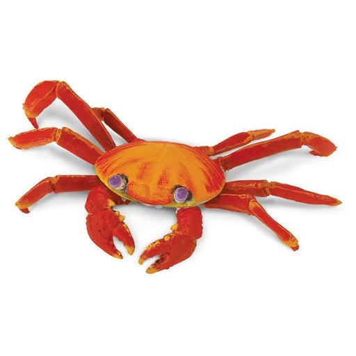 Galapagos Sally Lightfoot Crab - Safari Ltd®