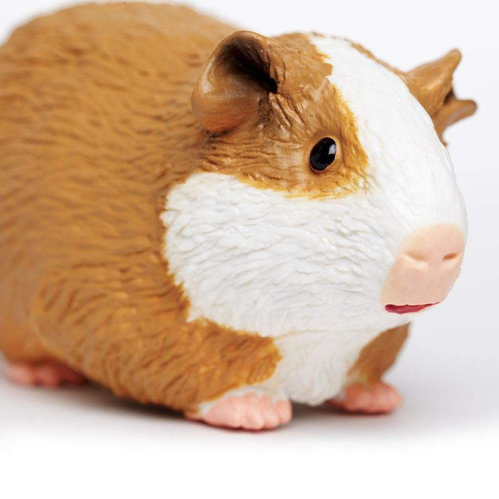 Guinea Pig - Safari Ltd®