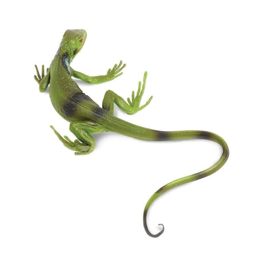 Iguana Baby - Safari Ltd®