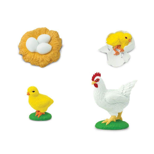 Life Cycle of a Chicken - Safari Ltd®